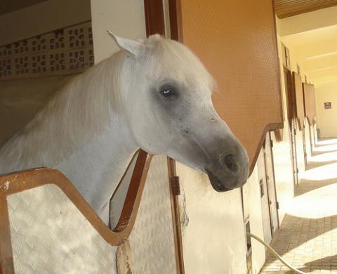 caballo-qatar.jpg